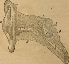"""Image from page 423 of """"A treatise on anatomy, physiology and hygiene : designed for colleges, academies and families"""" (1850)"""