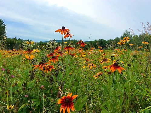 Flower Meadow at Kripalu