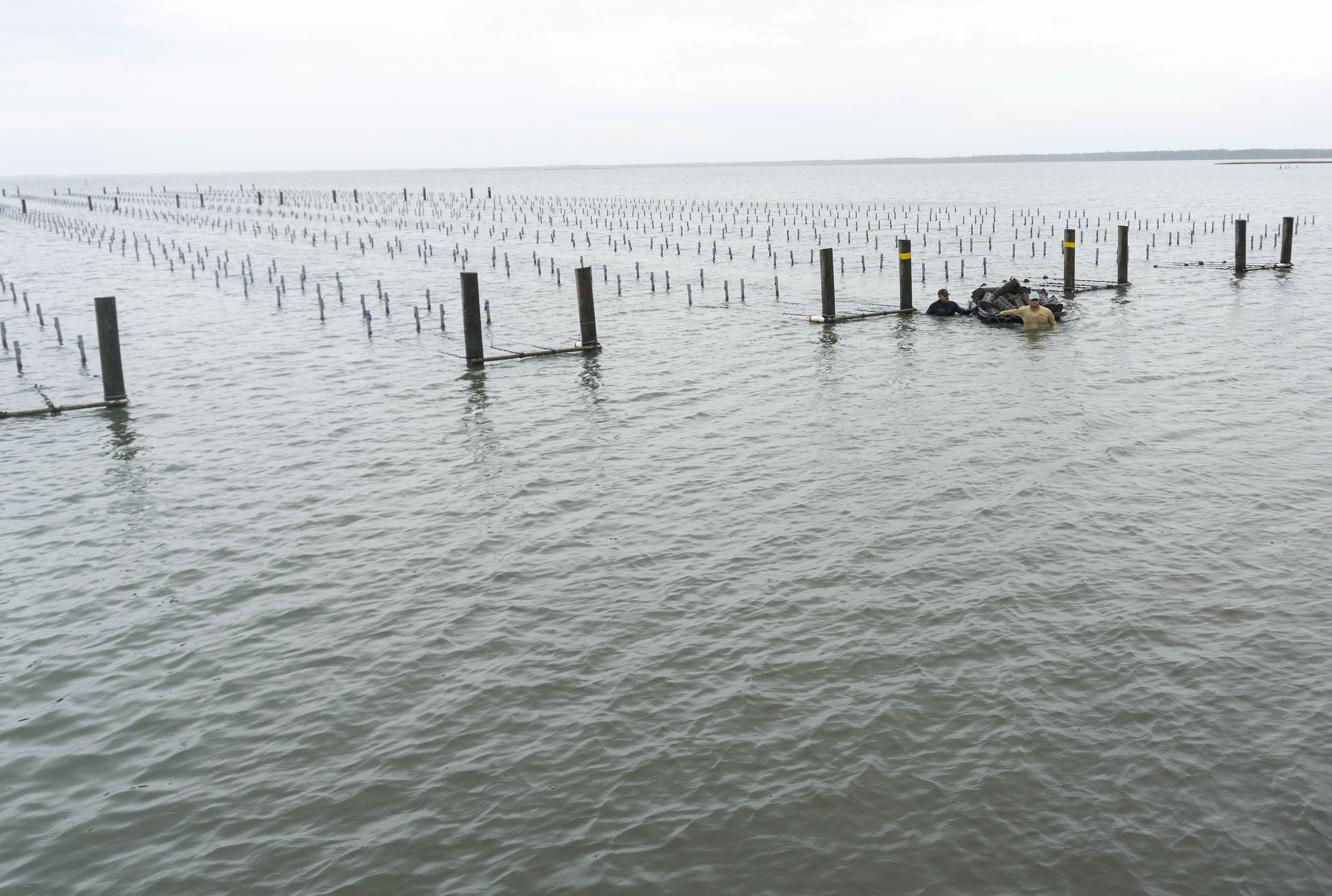 Growing Field at Murder Point Oyster Farm in Bayou la Batre, Ala., during - World Food Championships Blogger Summit, Orange Beach, Ala., Nov. 7 - 9, 2016.