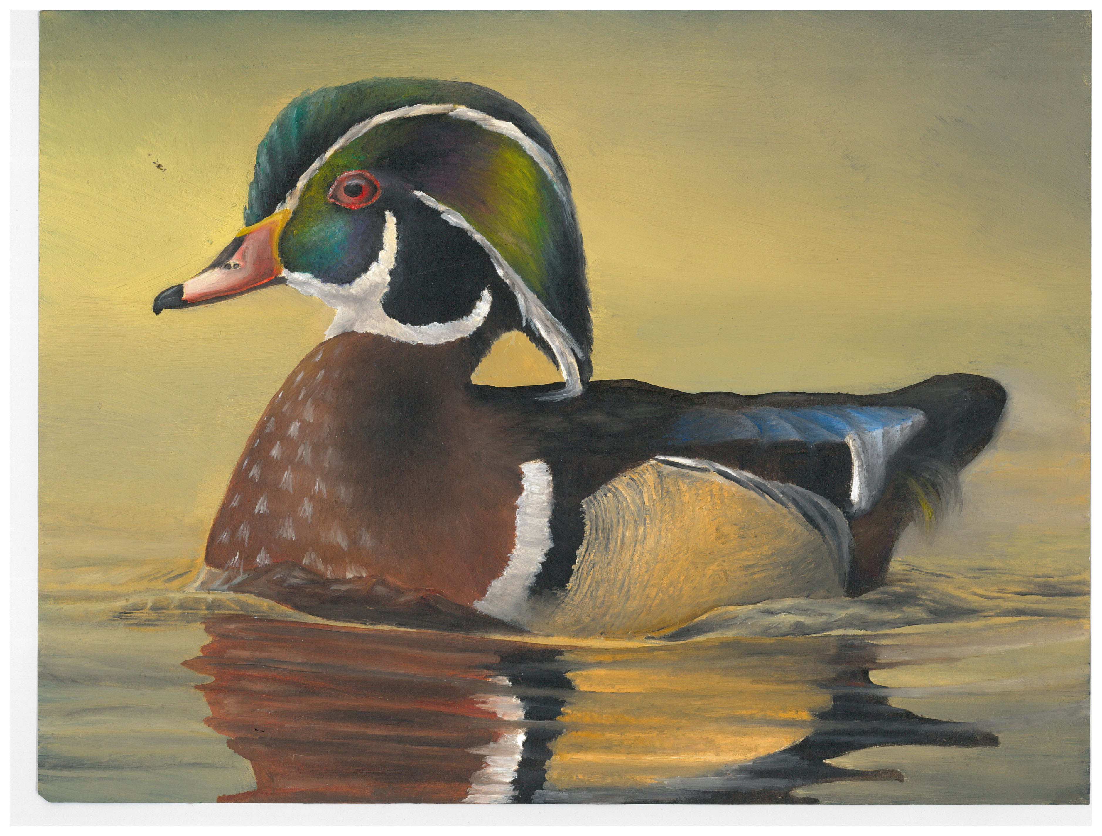 2016 Junior Duck Stamp Best of Show featuring a Wood Duck