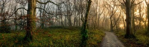 fog forest mist morning plants sunrise tree trees wood
