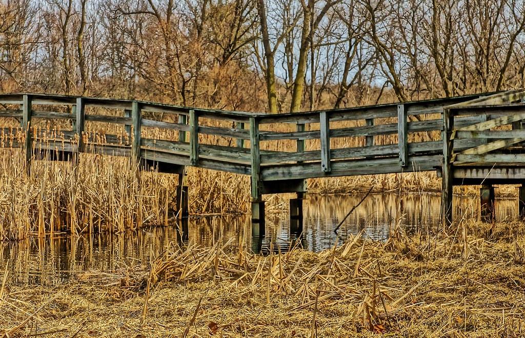 Walking Bridge In The Park