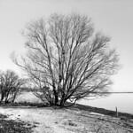I vandkanten - Nivå Bugt