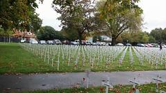 Field of Remembrance - Cranmer Square