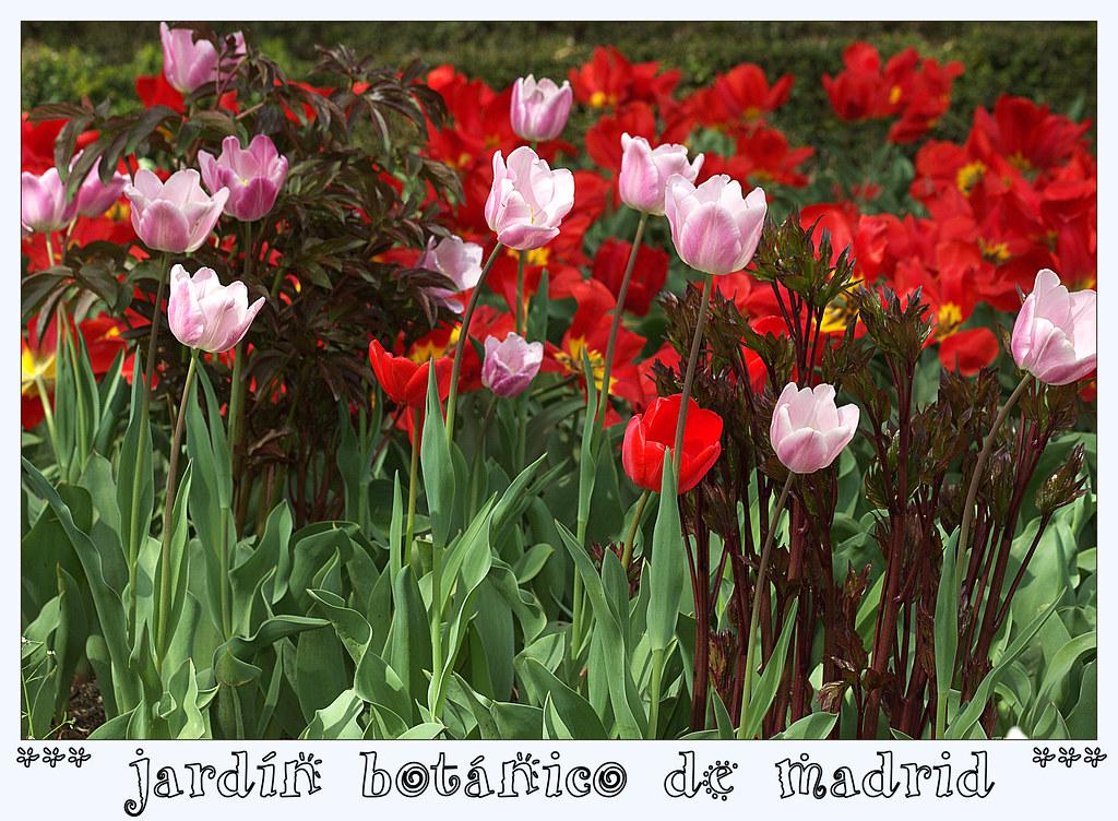 1 de abril de 2014 en el Jardín Botánico