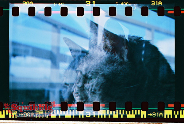 Cat Closeup with blue filter - Diana F+, double exposure.