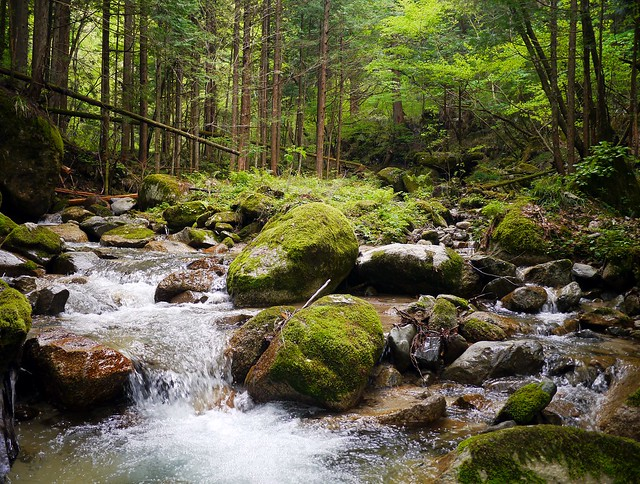 Woodland Bliss