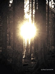"""forest """"rise and shine"""""""