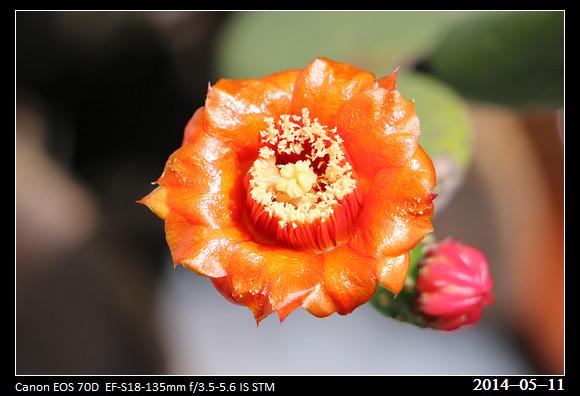 20140511_Flower