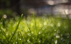 Grass and Bokeh