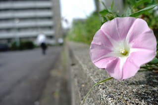 The flower in commuting 2014/06 No.1.