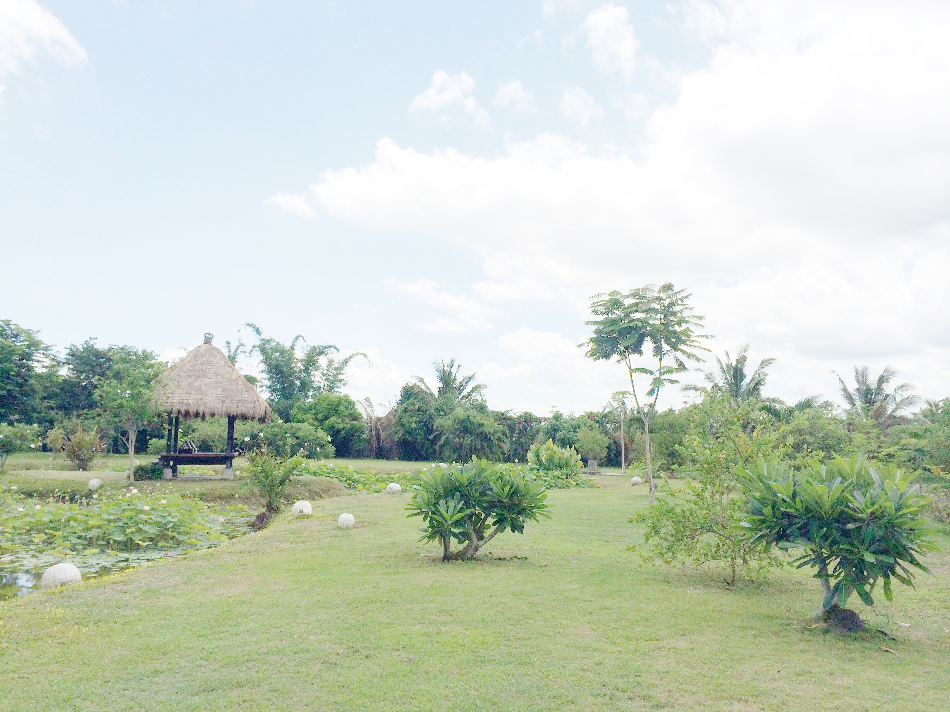 Lotus Pod Farm Visit