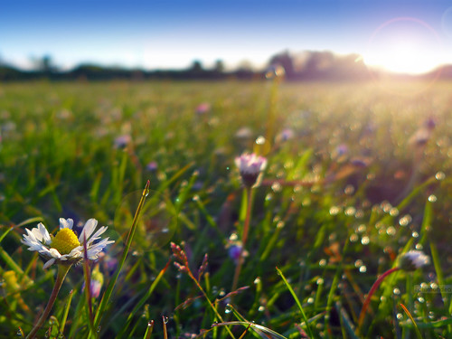 morning flower mañana grass wales sunrise bokeh flor cardiff gales amanecer cesped salidadelsol lx7 pontprennau lumixlx7 panasoniclumixlx7