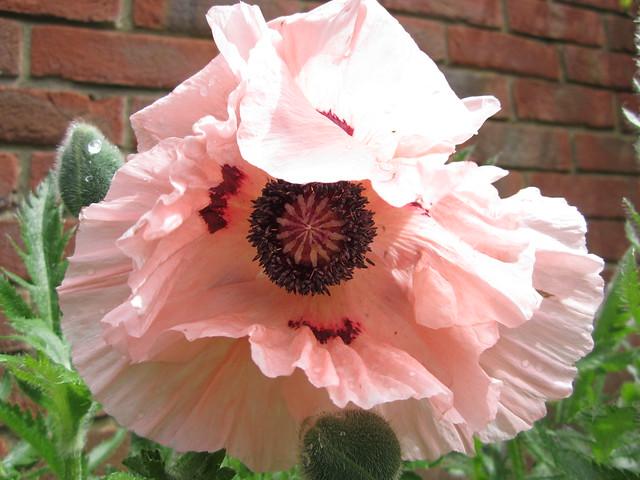 May garden 11.05 (3)