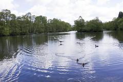 St ives pond