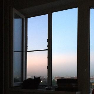 #sky #cat #home