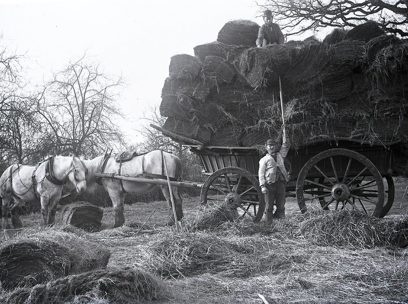 Hay wagon c.1890  Part of the George Woods collection. Image scanned from the photographer's original glass plate negative, located at Hastings Library. From East Sussex County Council Libraries Historical Photos collection on Flickr. Copyright East Sussex County Council.