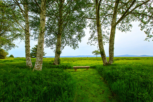 trees grass bench path oceanview pacificcounty oystervillewa