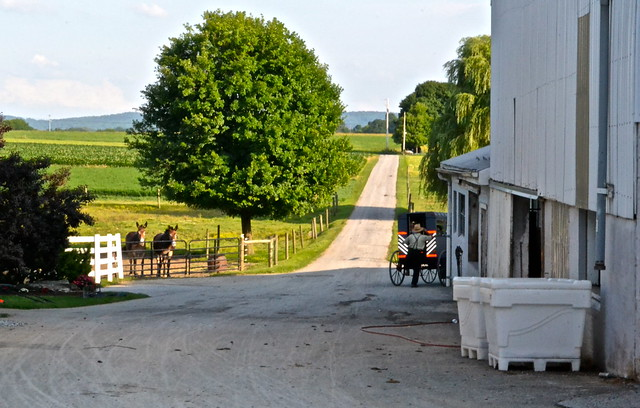Countryside - Amish Tour - Lancaster County PA