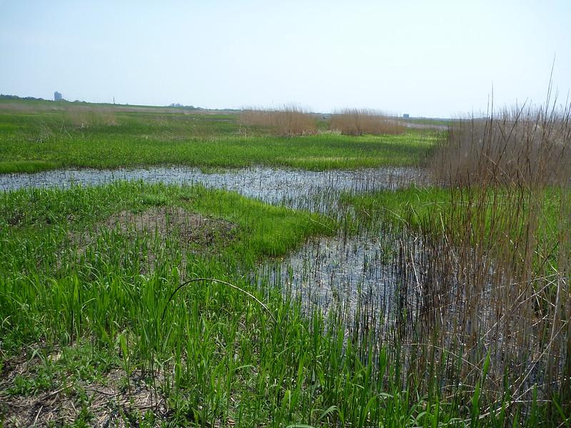 谷中湖の湿原