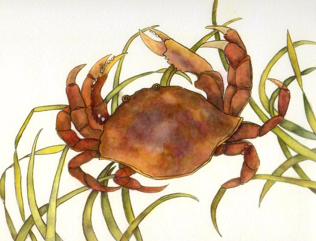Pat Rawnsley A Crab