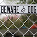Beware of Dog by aliawinden