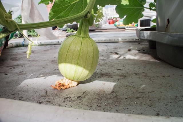Garden June 26 2014_31