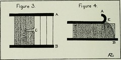 "Image from page 19 of ""Proceedings"" (1913)"