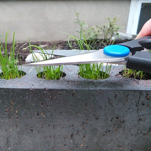 This is how I cut the grass.