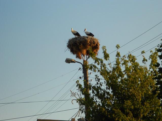 nido di cicogne, Ravadinovo, Bulgaria