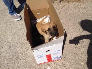 Cuccioli abbandonati dinanzi al canile (1)