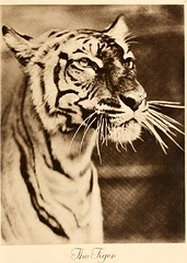 """Image from page 36 of """"Portraits at the zoo"""" (1915)"""