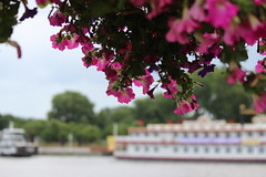 Riverboat and Blooms
