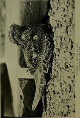 """Image from page 223 of """"Bird lore"""" (1899)"""