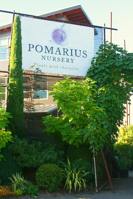 1_pomarius_nursery