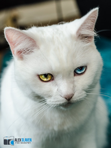 Grumpy Heterochromia