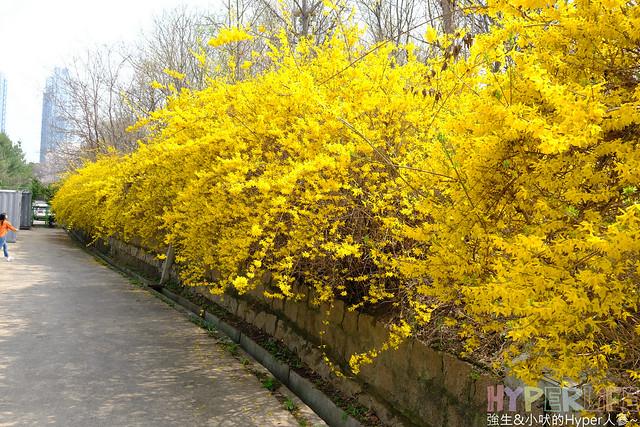 首爾林seoul forest (25)