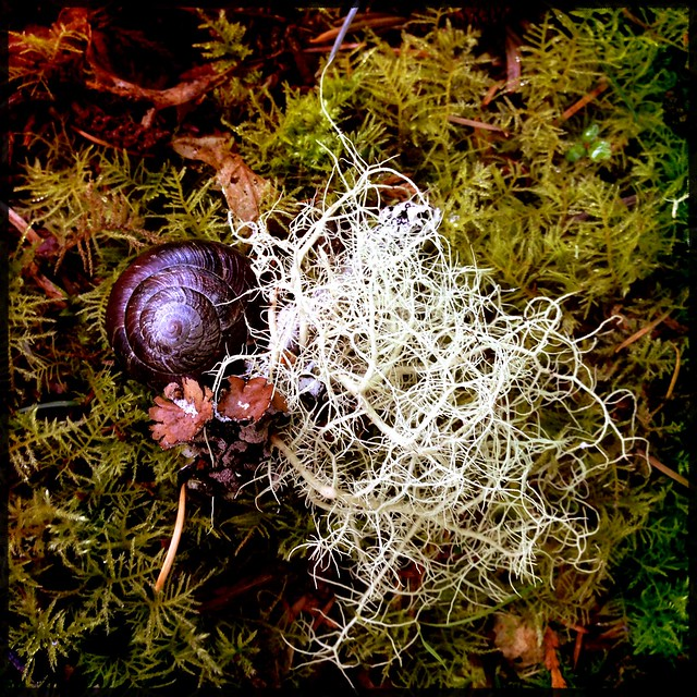 snail and lichen on estuary forest trail