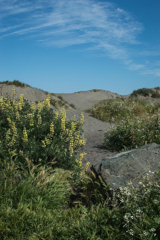 121/365 Dune Garden