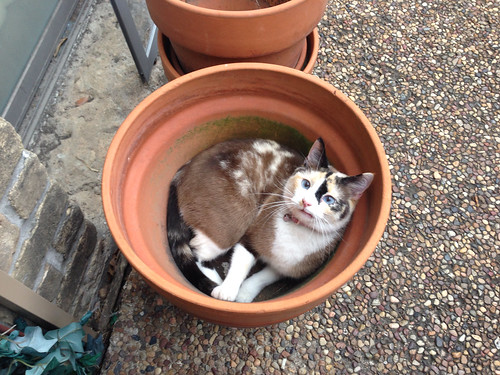 Pot full of cat