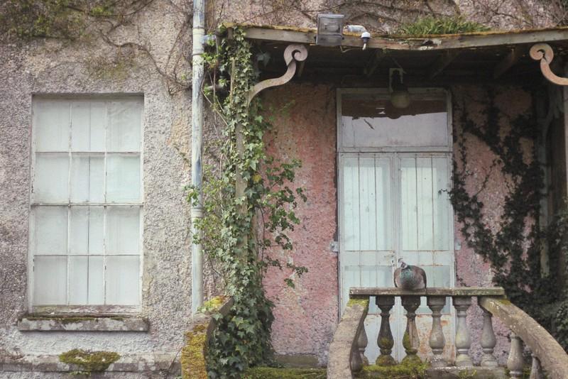 peahen altamont house