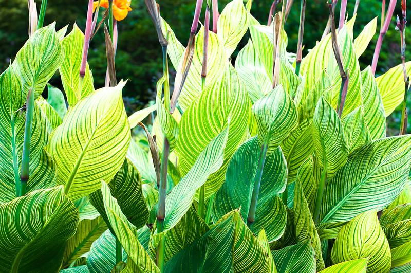 Foliage-12