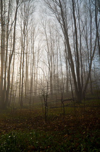 morning trees sky green wet fog forest sunrise landscape early spring woods floor dew damp