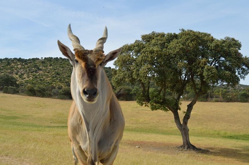 lara-vazquez-madlula-blog-nature-safari-inspiration