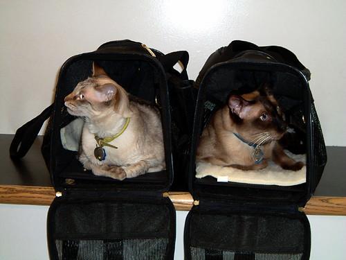 trickharrivet-bags