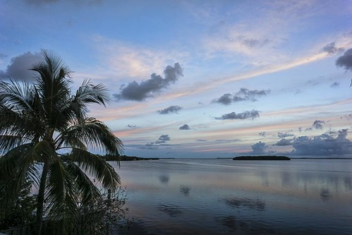 sea seascape tree water clouds sunrise keys landscape dawn bay key florida palm largo 2014 53114