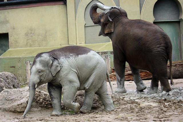 Hautpflege bei den Elefanten
