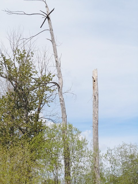 Wonder how the stick got up there?