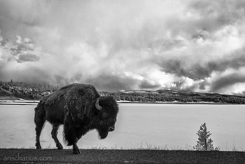 Yellowstone NP #1 - Nikon 1 V1 - Infrared 700nm & 6,7-13mm