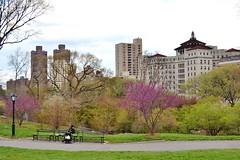 Central Park-East Meadow, 04.26.14